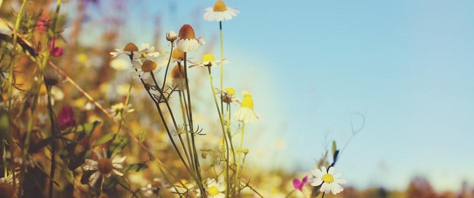 meadow-845469_960_720